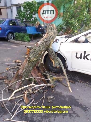На автомобиль Uklon упало дерево.