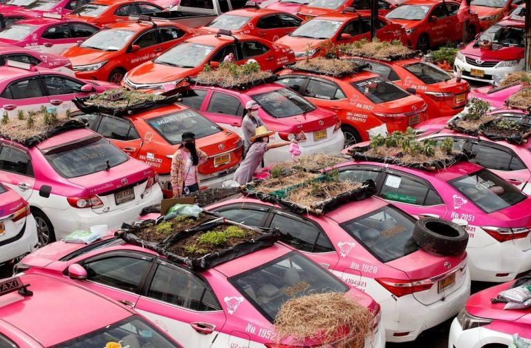 Обанкротившиеся таксисты в Бангкоке разбили огород на крышах машин